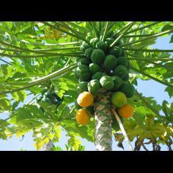 Terrenos ruta Leona Vicario en Zona Agropecuaria Cancun